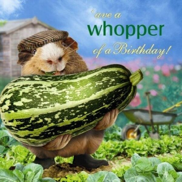 Details About Funny Guinea Pig Birthday Card What A Whopper Vegetable Gardener Allotment