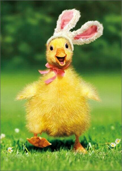 Duckling Bunny Funny Easter Card - Greeting Card by Avanti ...