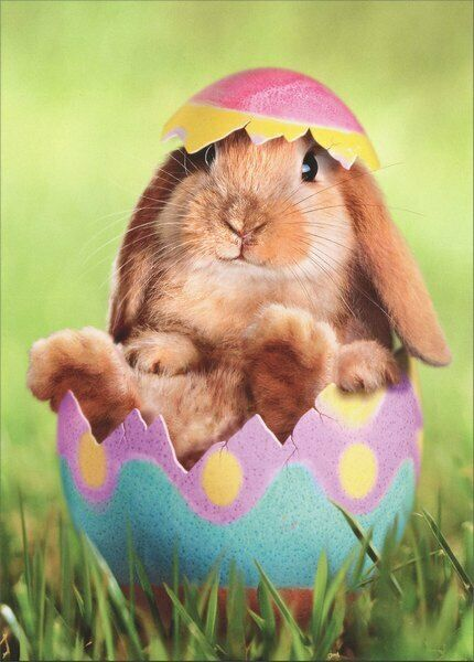 Bunny in Easter Egg Easter Card - Greeting Card by Avanti ...