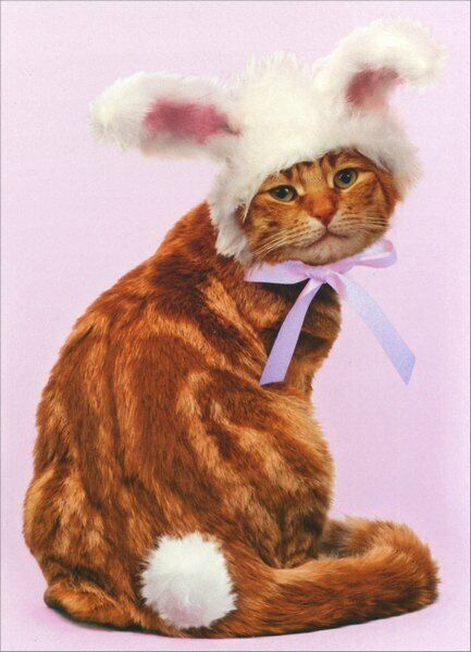 easter bob in bunny ears easter card   greeting card by
