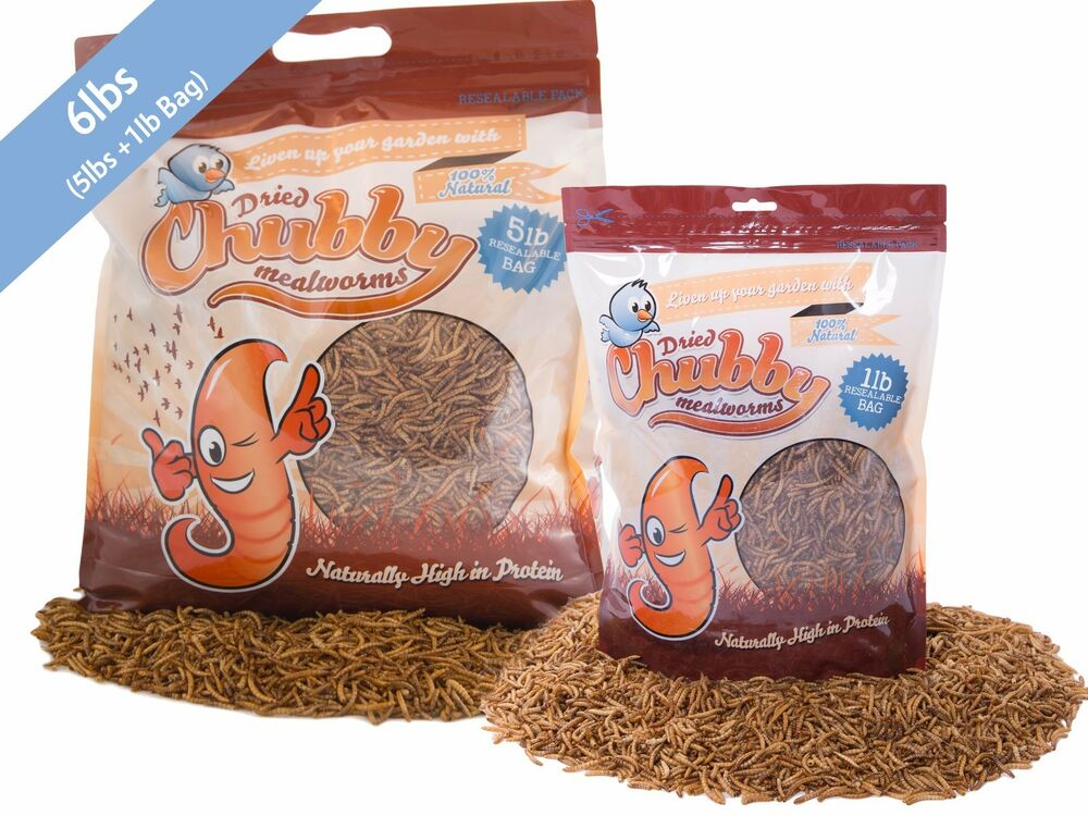 6lbs chubby dried mealworms for birds reptiles poultry for Mealworms for fishing
