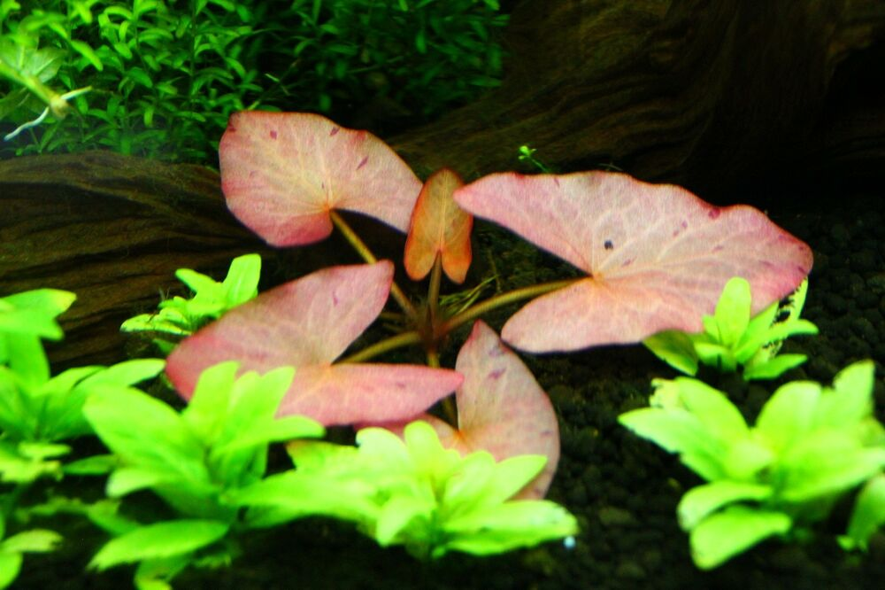 how to secure live plants in aquarium