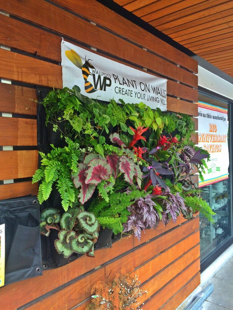 Living wall planters vertical gardening wallpot - How to make a living wall ...