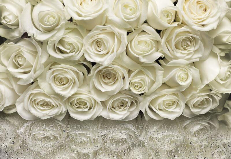 Wall Mural WHITE ROSES Photo Wallpaper Large Size Wall Art