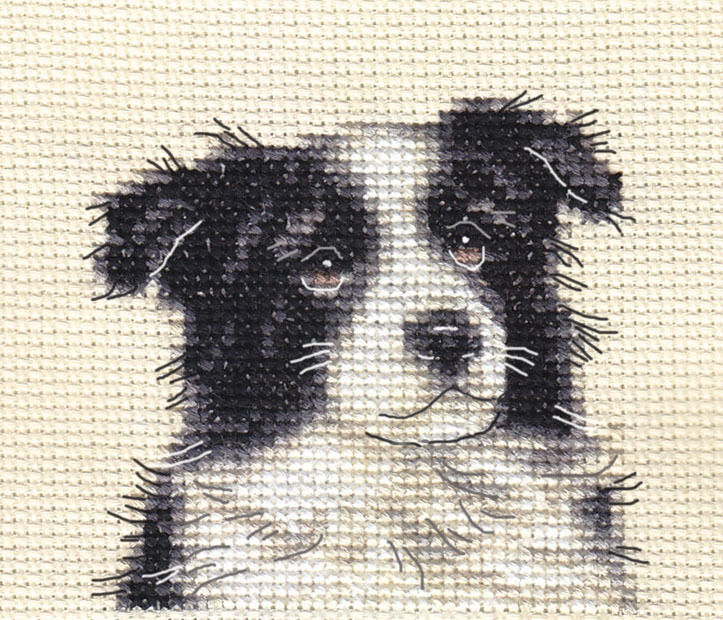 Knitting Pattern For Border Collie Dog : BORDER COLLIE PUPPY ~ DOG ~ Full counted cross stitch kit with all materials ...
