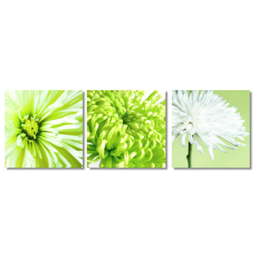 Lime green white chrysanthemum floral flower set of 3 for Floral wall art