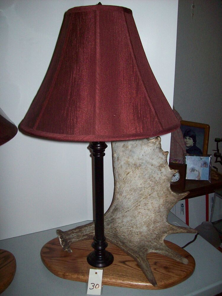 Real Alaskan Moose Elk Deer Antler Shed Horn Oak Table