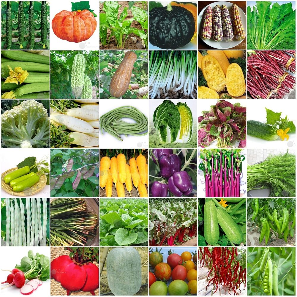 60kinds Heirloom Garden Vegetable Seed Non-GMO Seeds Bank