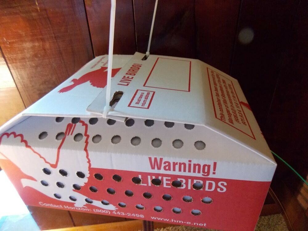 1 Horizon Quail Nest Or Baby Chick Shipping Boxes For Live