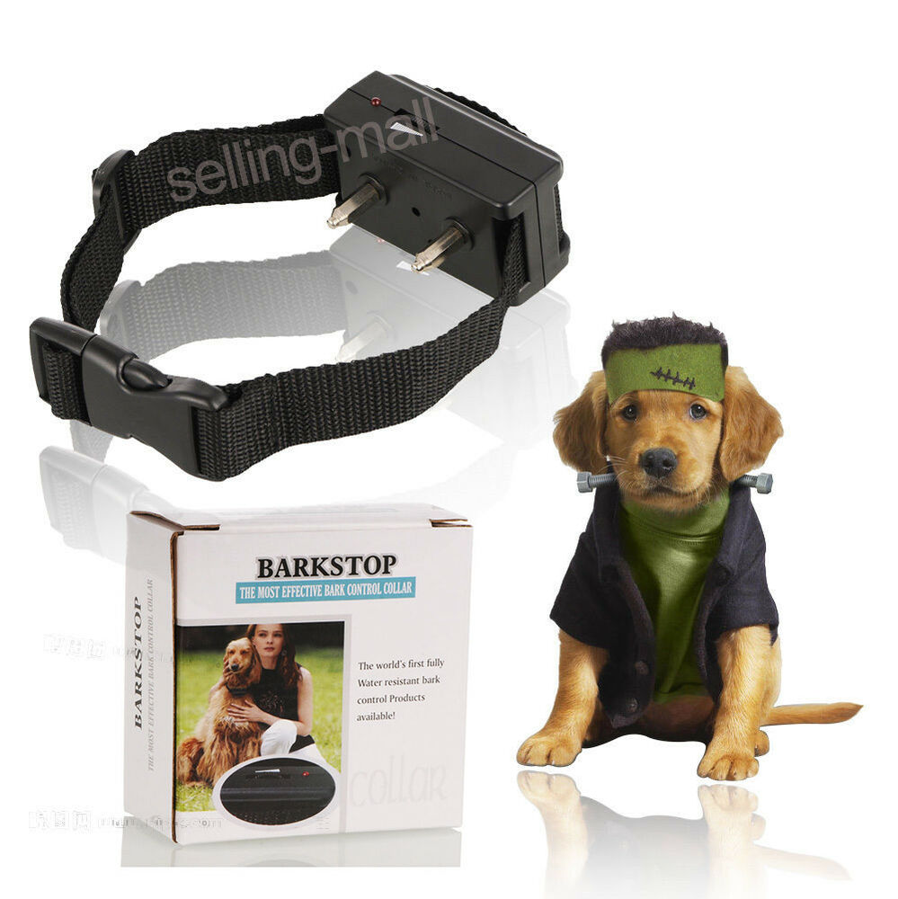 Shock Collars For Extra Large Dogs
