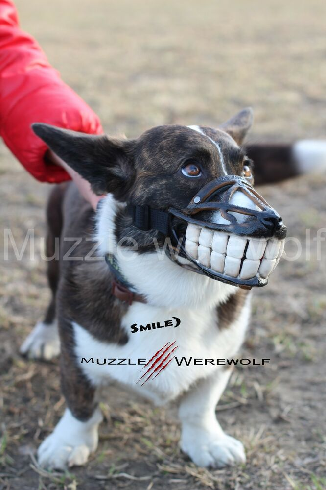 Werewolf Dog Muzzle Uk
