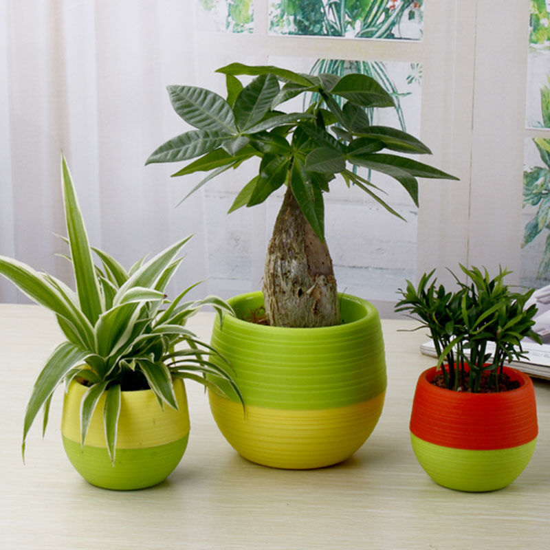 Sale Flower Plants Pot Cactus Mini Random Colorful Office: cactus pots for sale