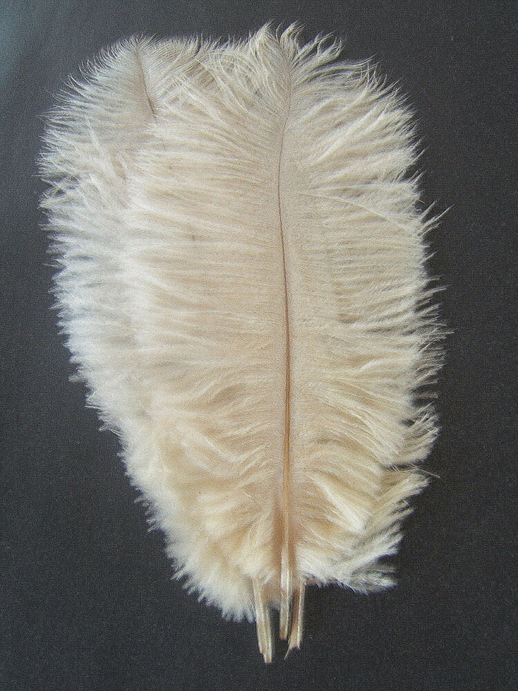 10 ivory ostrich feathers 10 13 l ebay for Where to buy craft feathers