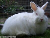 Annual 1 year 12 month sponsor MUFFIN Rescue Rabbit Bunny Animals - 100% CHARITY