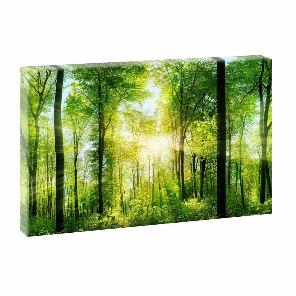 wald bild auf leinwand poster wandbild deko natur xxl 160 cm 80 cm 729 ebay. Black Bedroom Furniture Sets. Home Design Ideas