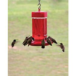 Kyпить FIRST NATURE LARGE 32 oz HUMMINGBIRD FEEDER, #3055, MADE IN THE USA          dm  на еВаy.соm