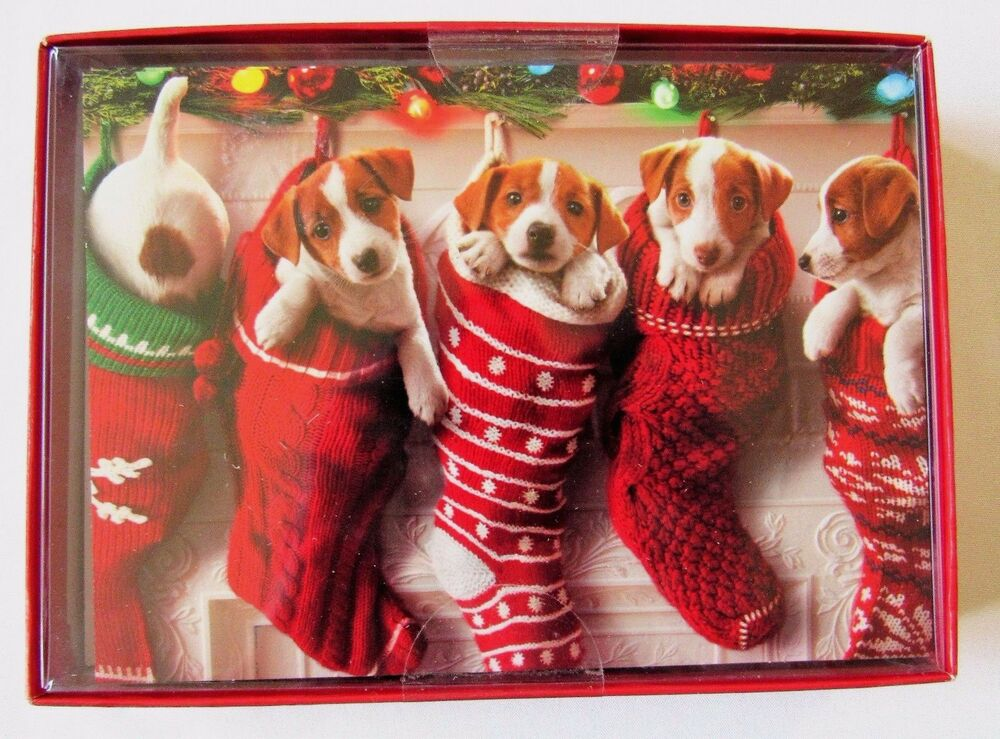 Christmas Cards Puppies In Stockings 14 Cards 16 Envelopes Cozy ...