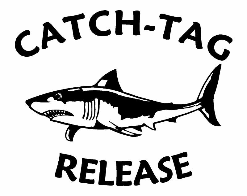 Catch tag release vinyl decal shark fishing sticker 7 ebay for Fishing stickers and decals