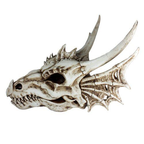 Ancient Jurassic Fossil Dinosaurs Dragon Large Skull Head