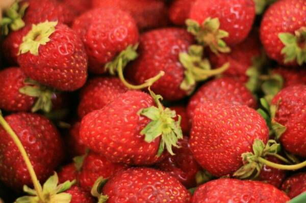 VEGETABLE  STRAWBERRY FOUR SEASONS  200 FINEST SEEDS
