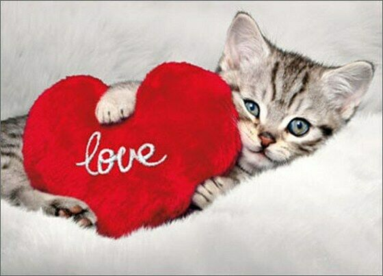 Kitten Holds Heart Cat Valentineu0027s Day Card   Greeting Card By Avanti Press  | EBay