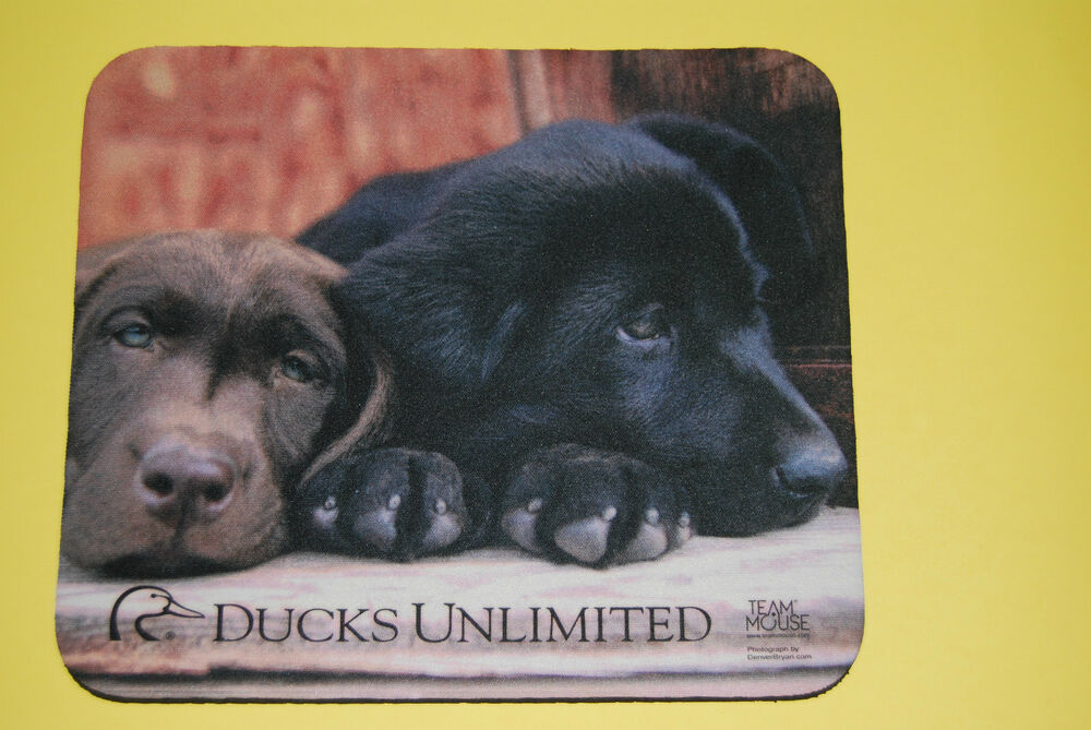 Ducklings and puppies