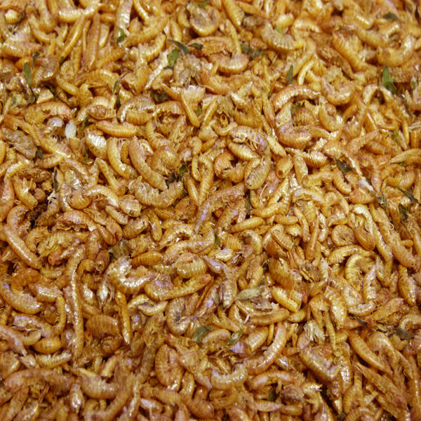 ... Gammarus Shrimp 1kg, Fish Food, Koi Food, Turtle & Terrapin eBay