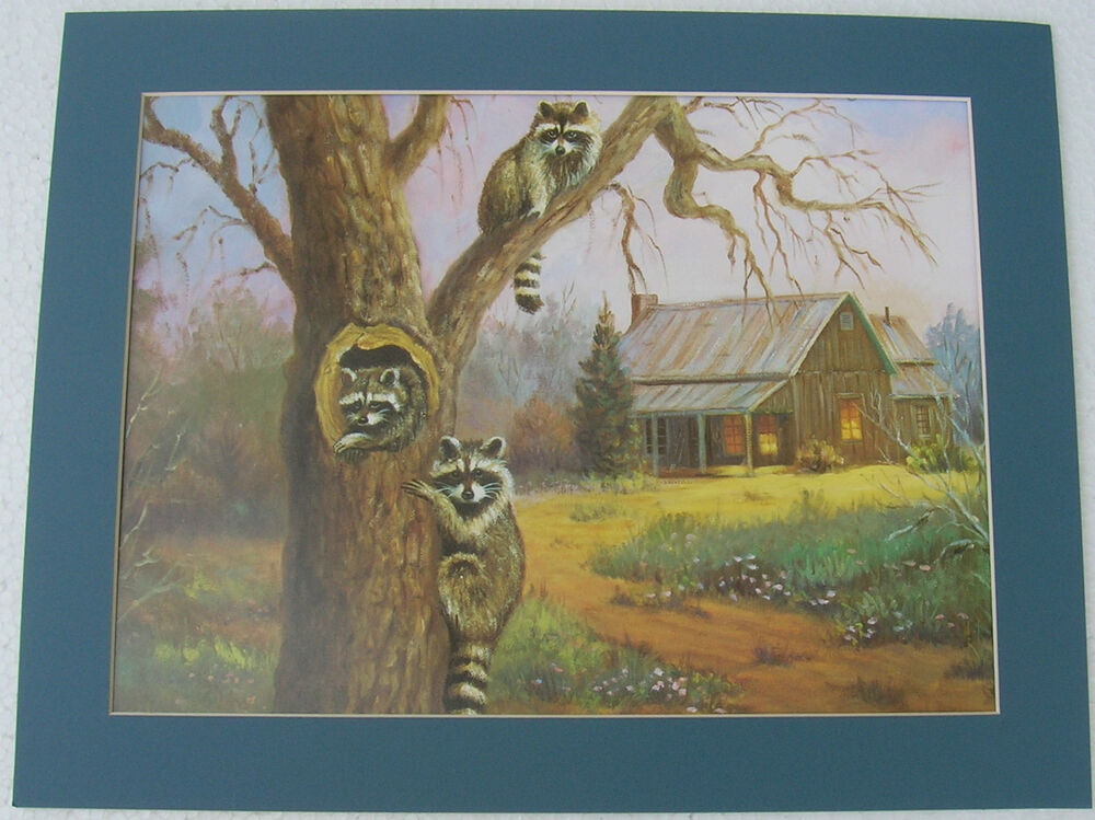 Raccoon prints unframed lodge country picture print for Prints for home decor