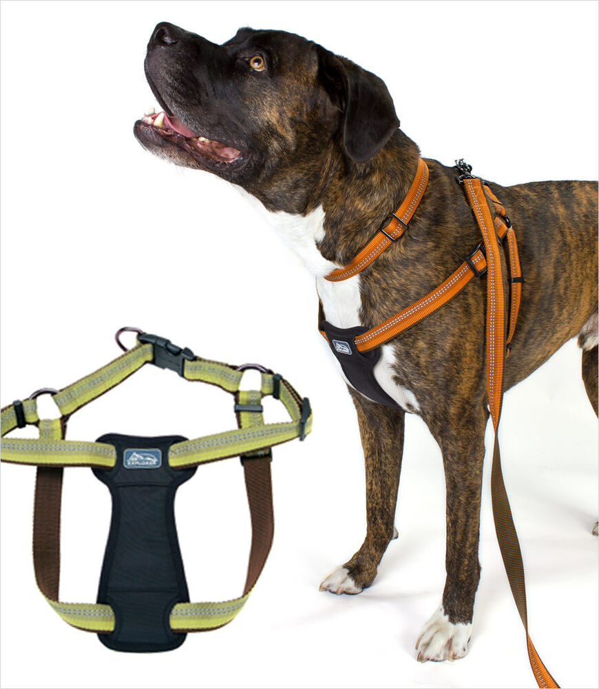 Harness For Dogs Free Shipping