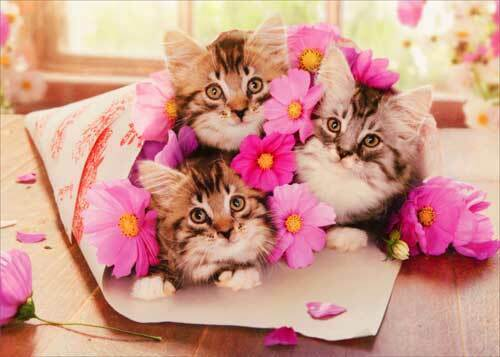 kitten bouquet funny cat birthday card  greeting card
