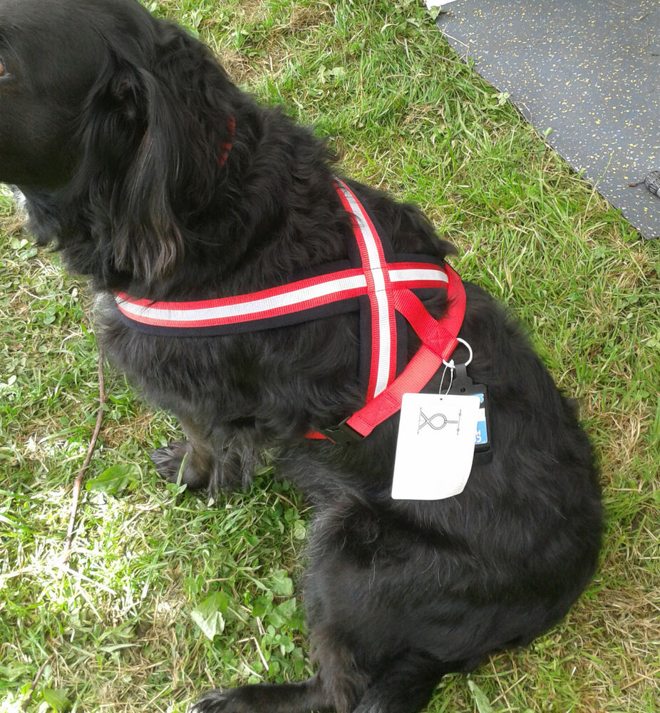 Company Of Animals Comfy Dog Harness Red Reflective