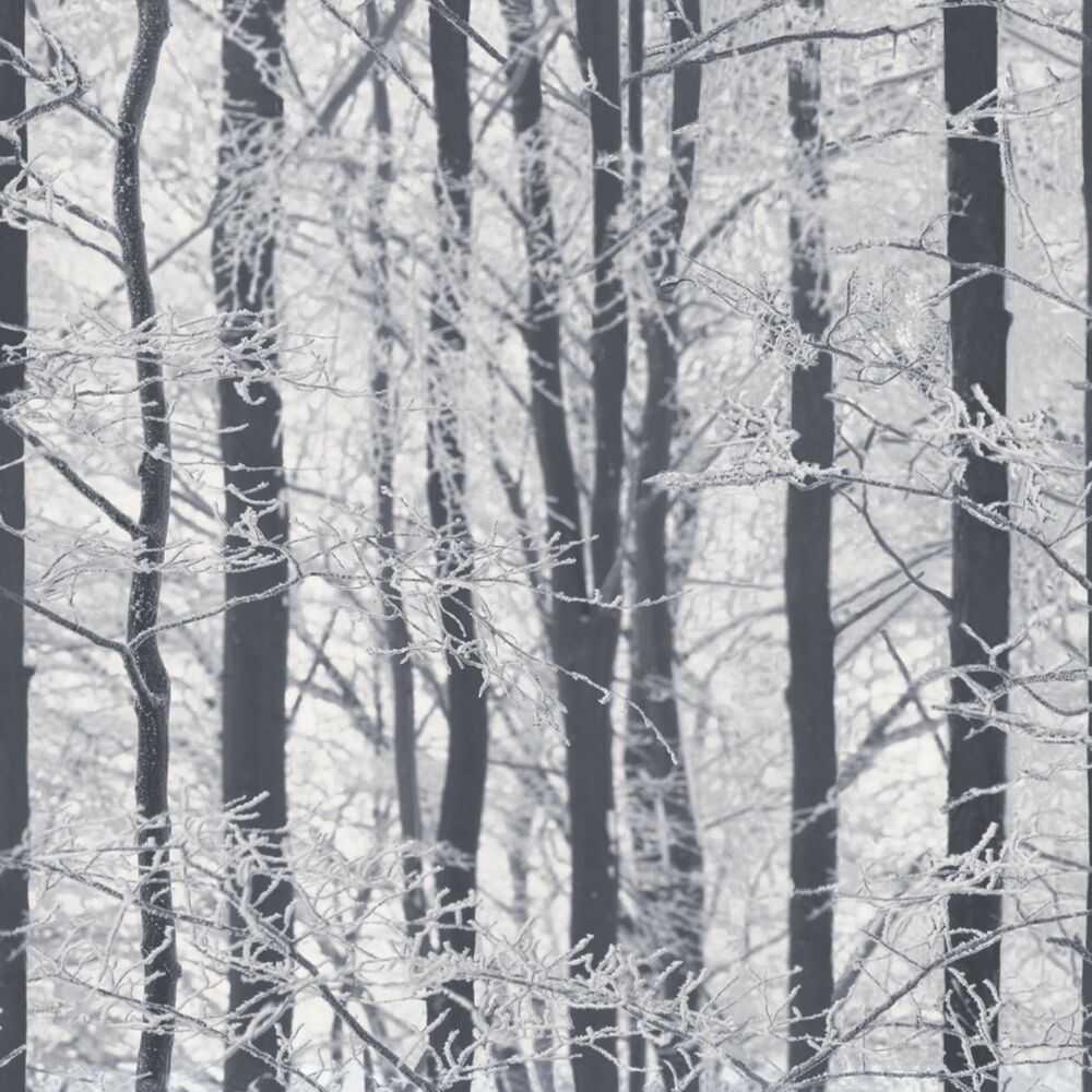 Arthouse frosted wood glitter black and white silver birch for Black and white tree wallpaper mural