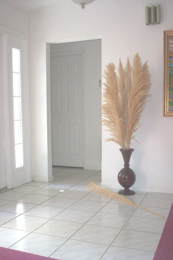 Dried Plumes Dried Natural Pampas Grass 5 Feet Tall