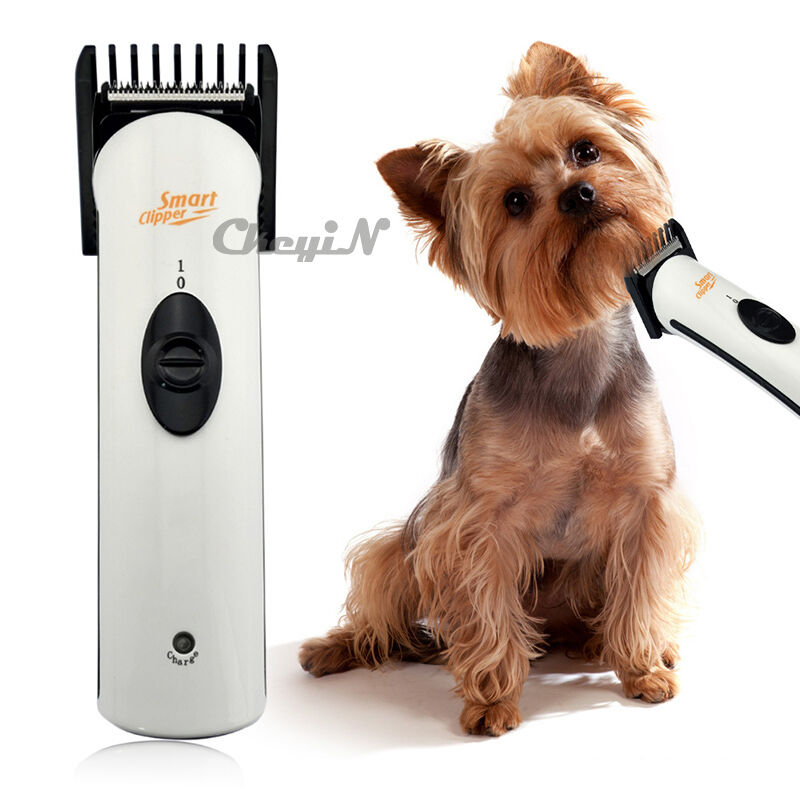 All Pro Dog And Cat Grooming