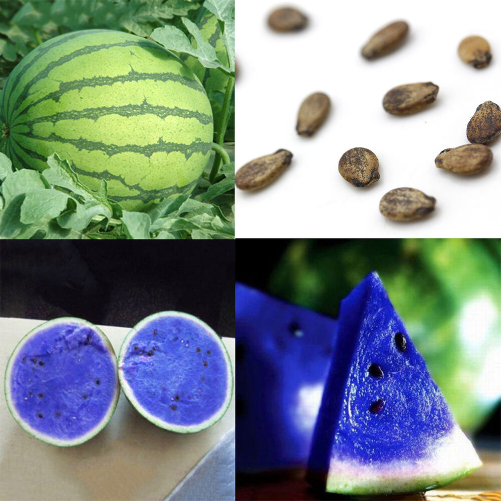 10pcs Rare Blue Watermelon Seeds Vegetable Organic Home ...