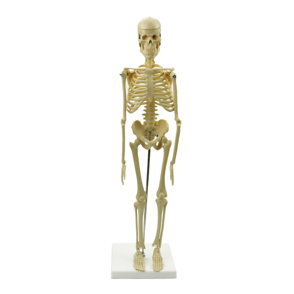 Learn human skeleton
