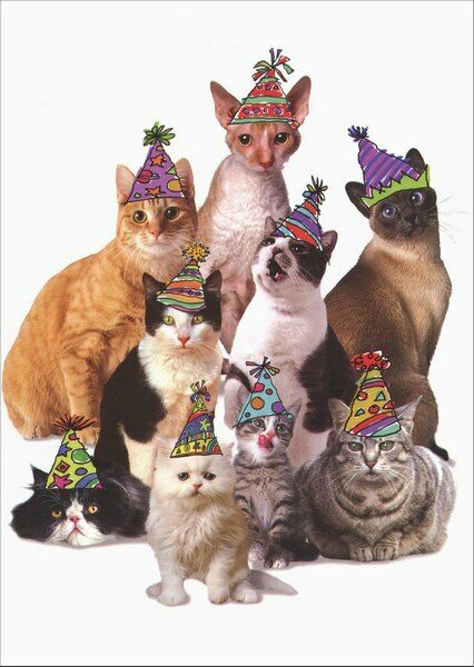 Cats In Party Hats Graphique De France Birthday From All
