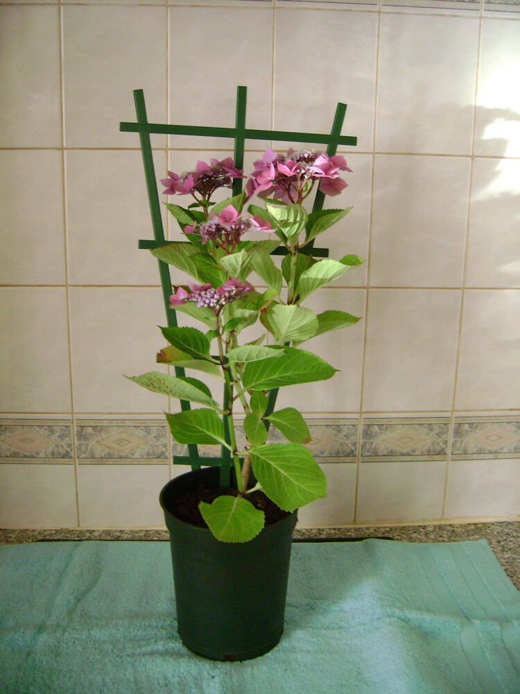 2 X Clip On Plastic Plant Pot Trellis Support For