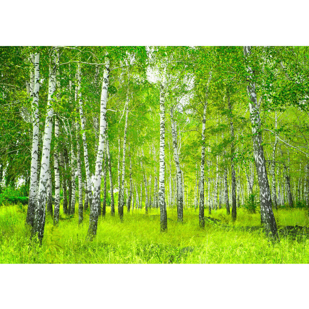 vlies fototapete wald sunny birch forest waldtapete birkenwald b ume birke ebay. Black Bedroom Furniture Sets. Home Design Ideas