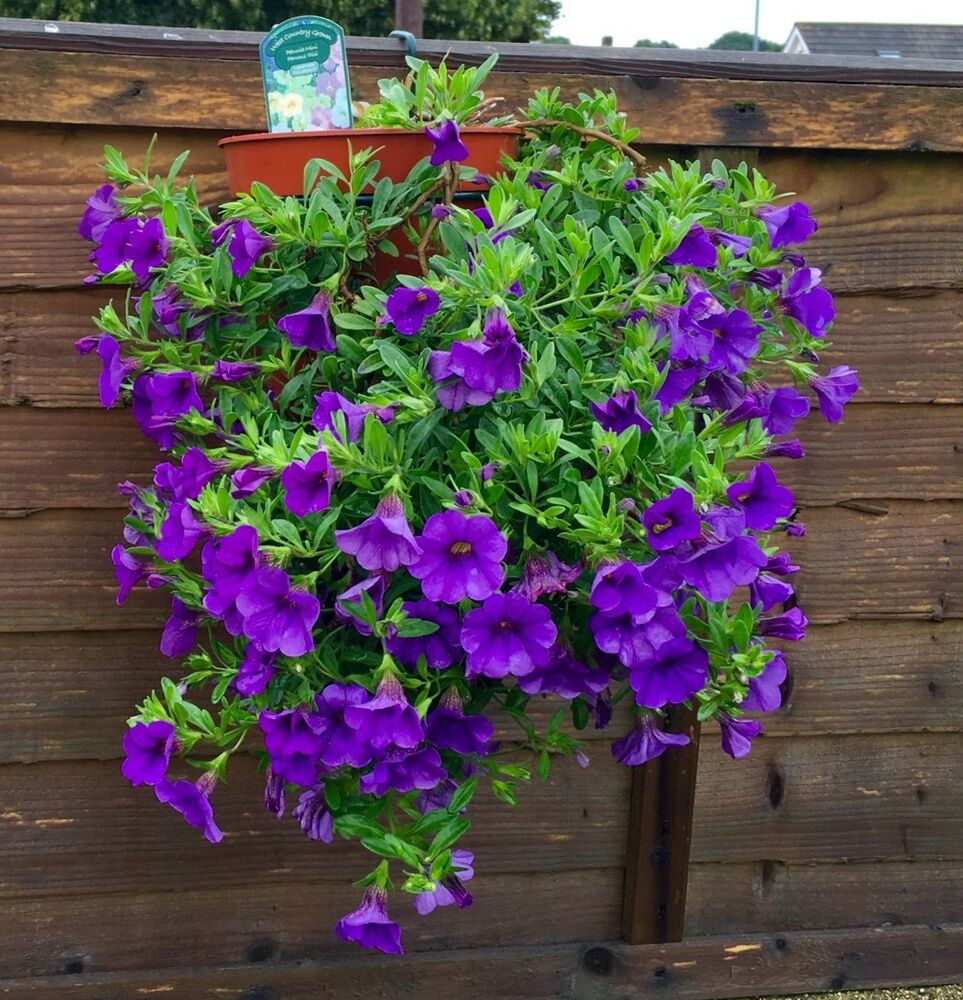 6 plant pot holders hang 5 flower pots on fences buy 2 - Flower pots to hang on fence ...