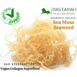 Kyпить Rastarafi® Whole Leaf Irish Moss Sea Moss 1 lb | Raw WildCrafted Superfood-16 Oz на еВаy.соm