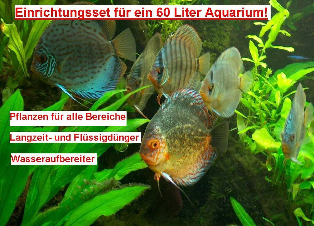 aquarium set f r 400 liter aquarium wasserpflanzen ebay. Black Bedroom Furniture Sets. Home Design Ideas