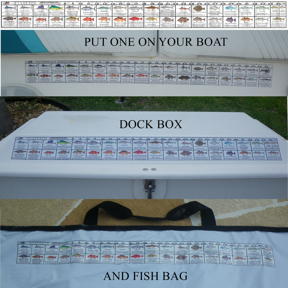 Georgia saltwater fishing regulation ruler fish decal ebay for How many fishing rods per person in texas
