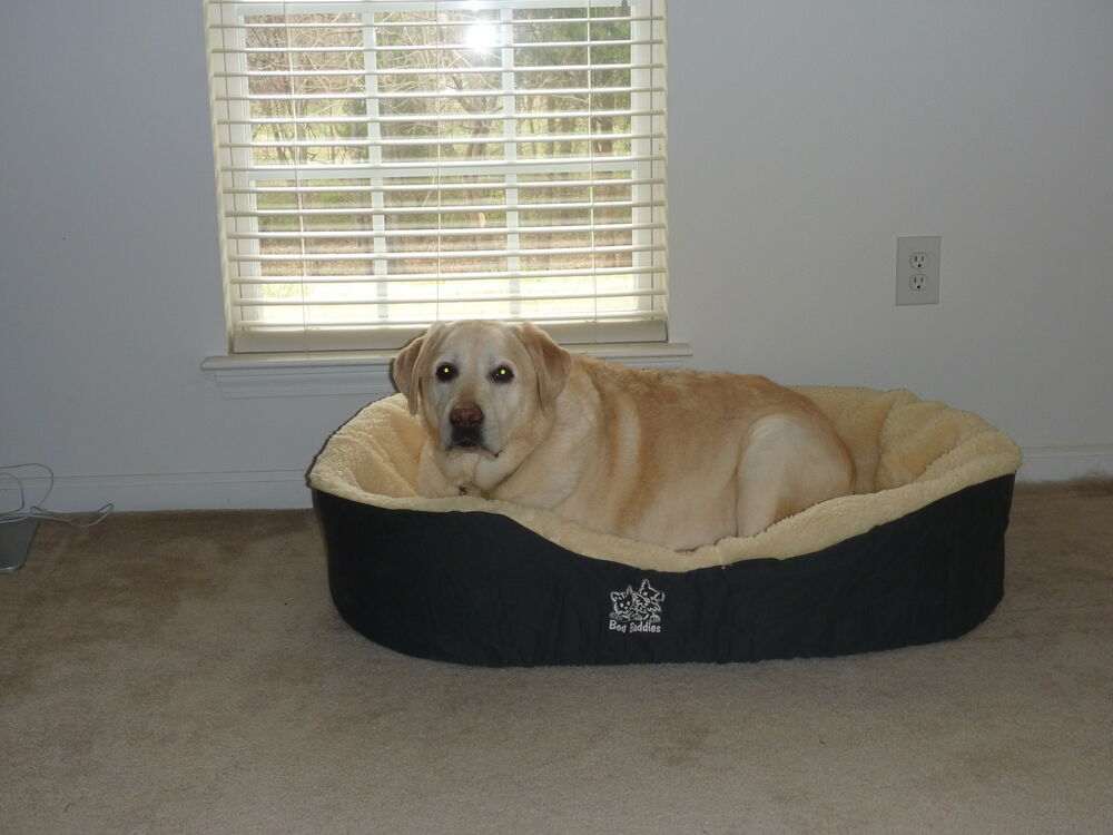 Hamster 101 furthermore Extra Large Ac Dog House likewise 371483781251 besides Free Dog House Plans For Large Dogs together with Buffalo Horns. on jumbo dog beds
