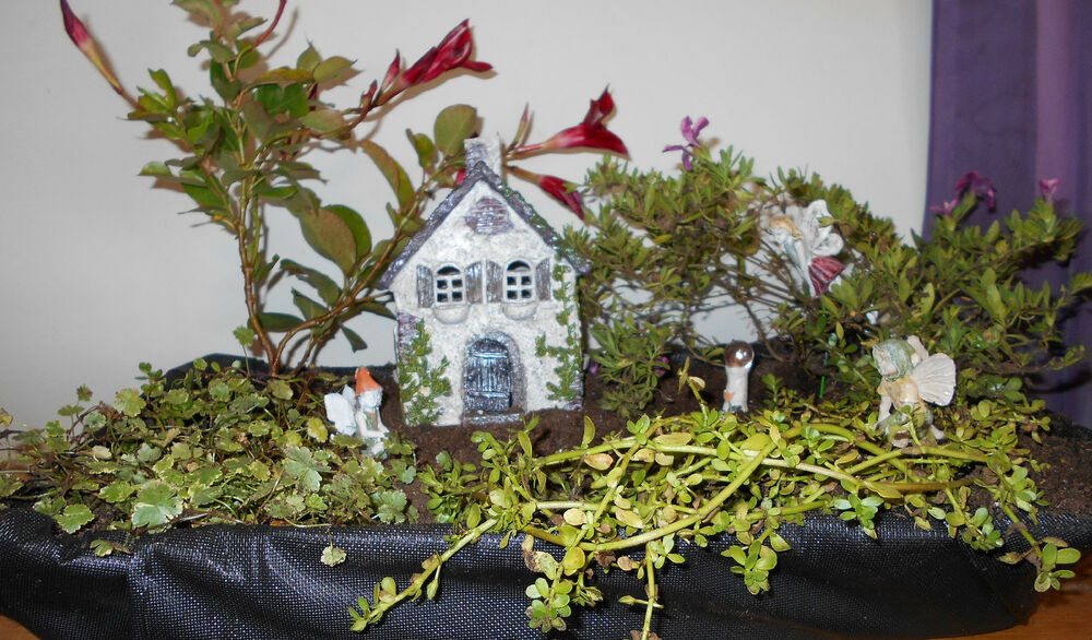 Miniature Garden Fairy Gnome Ivy House Indoors Or Outdoors