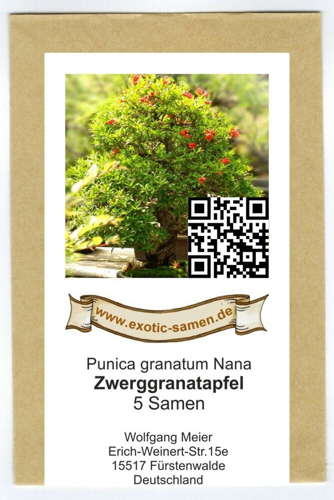 bonsai zwerg granatapfel punika granatum 39 nana 39 5 samen ebay. Black Bedroom Furniture Sets. Home Design Ideas