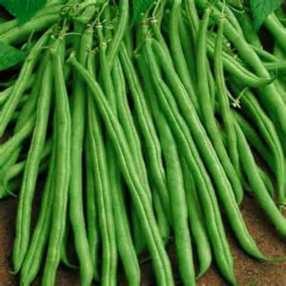 Tendergreen Bush Green Beans 5 6 Quot Long Combined S H See