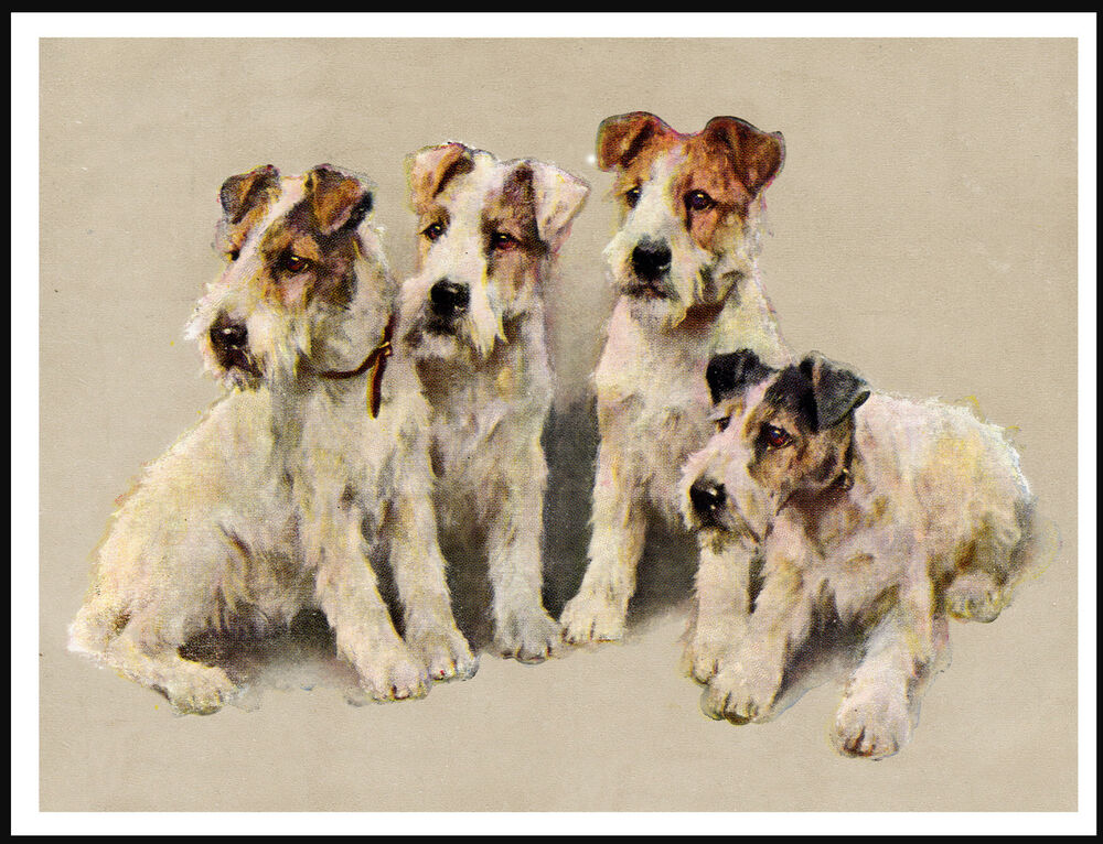 terrier group dogs wire fox terrier group of dogs lovely image dog print 9445