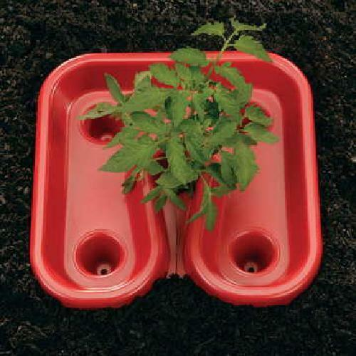 Gardeneer Red Tomato Tray 3pk Automator Start Tomatoes