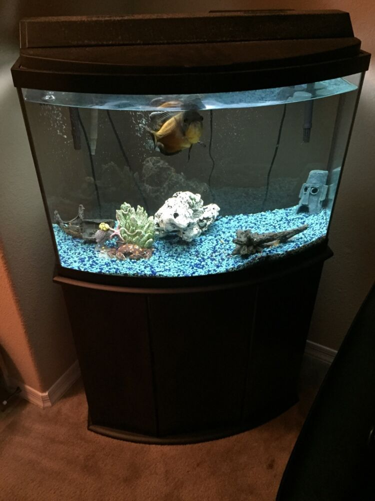 35 gallon fish tank ebay for 20 gallon fish tank size